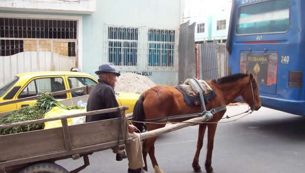 A man travels a street in Cuenca with his horse-drawn wagon.